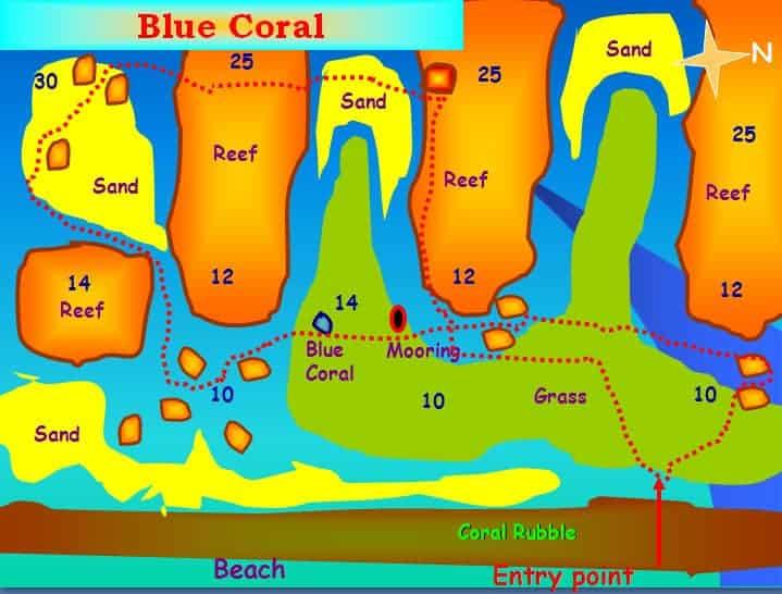 Blue Coral dive site Aqaba