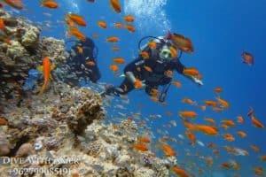 divers enjoying diving