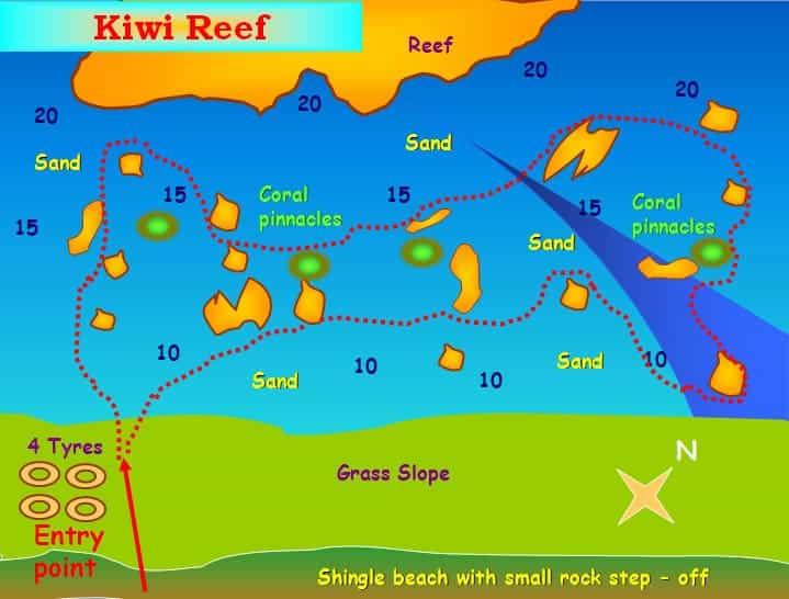 Kiwi Reef