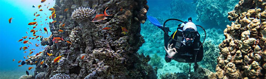 corals red sea aqaba, забронировать дайвинг