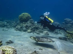 Girl diving with turtl, discover scuba diving