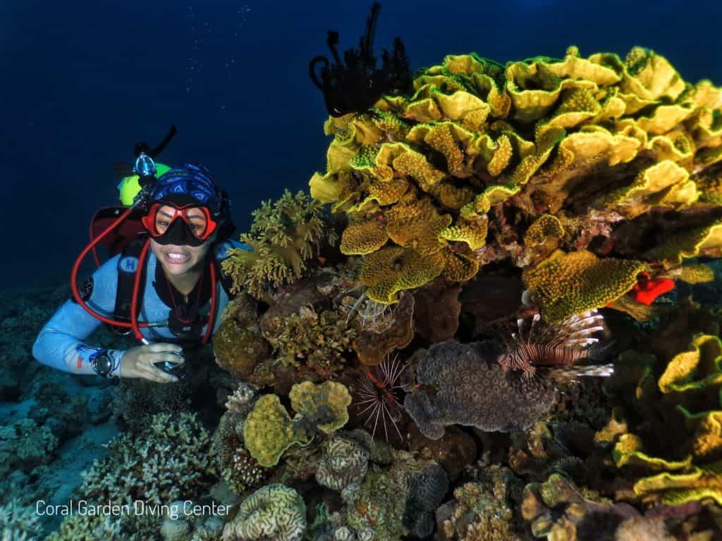 Cabbage coral and girl diver red sea aqaba, Места для дайвинга в Иордании