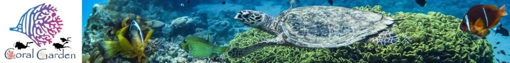 turtle and fish swimming scuba dive