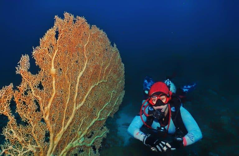 beginner level, Gorgonia coral corals diving in Aqaba, Места для дайвинга в Иордании
