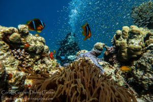 aqaba snorkeling