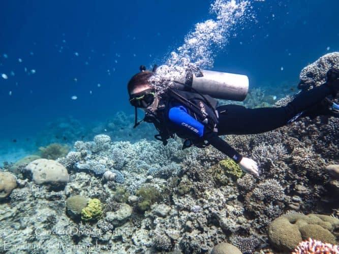 Japanese gardens dive site aqaba red sea