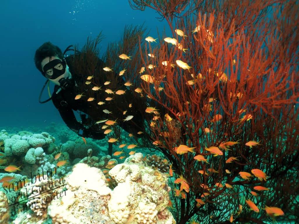 Korean diver near corals