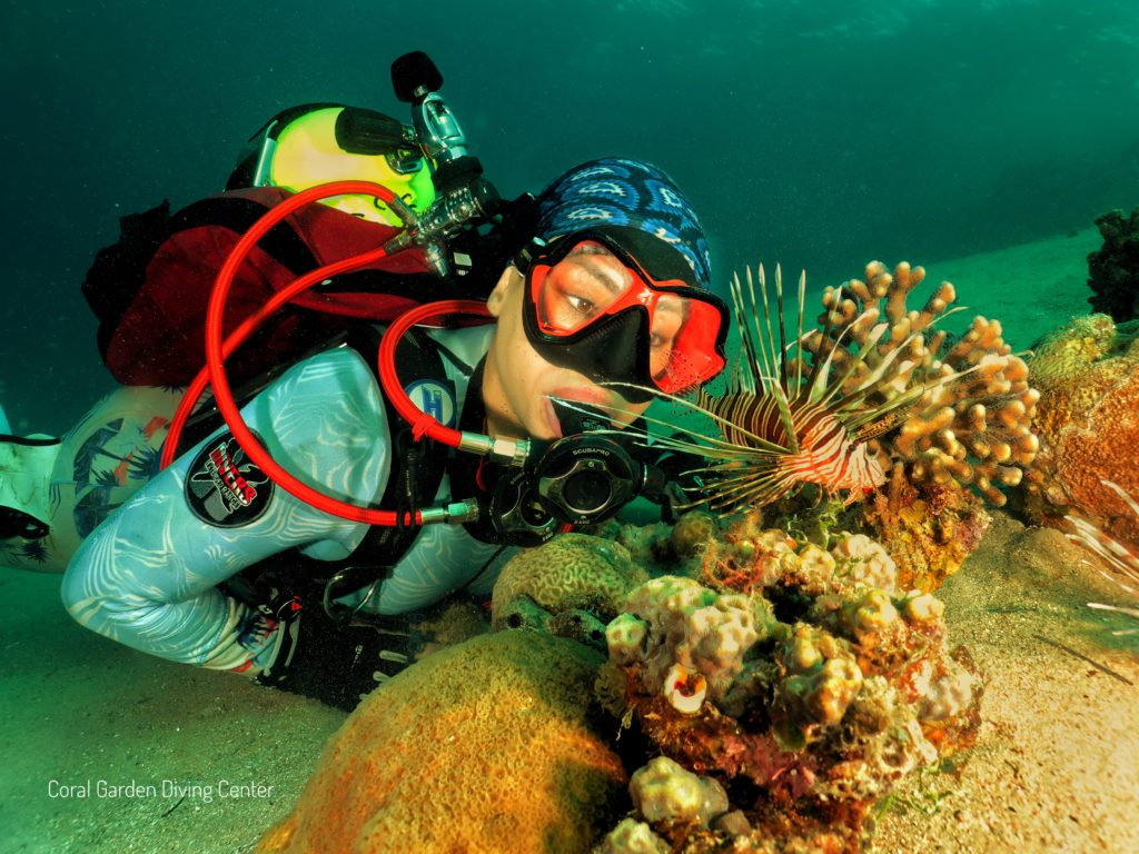 Lion fish red sea aqaba