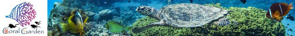Banner scuba diving in aqaba